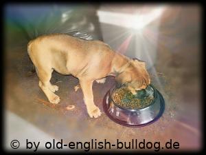 Welpenfutter Old English Bulldog